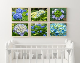 The Japan's Blue/Violet Hydrangea Set of 6 Photo Prints, Hydrangea Photography Print