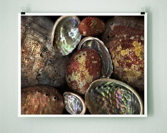 ABALONE - 8x10 Signed Fine Art Photograph