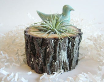Air plant holder,  Cubicle decor, Hickory wood plant holder,  Desk decor