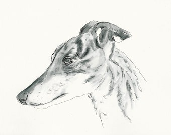 "A4 Greyhound Print called ""Tiggy"""