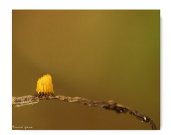 Slime Mold Photograph Slime Mold Print...Affordable Home Photography Prints Nature Photography Decor Nature Lover Woodland Scene
