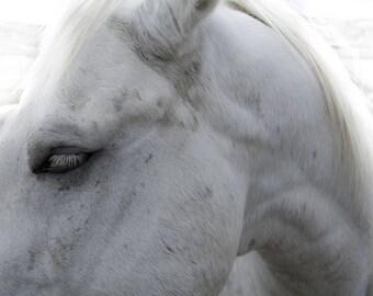 Horse photo, equine photo, western art, ranch decor, cowboy art, rustic wall art, country decor, rural art, white horse print, ranch art
