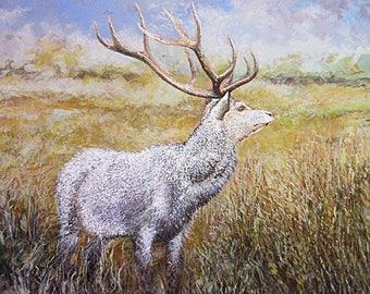 White Stag, original wildlife painting, deer, hand painted wildlife art, wall art, white deer, RSPB Arne