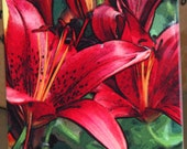 """Ceramic Tile or Coaster - Red Asian Lily 4.25"""" x 4.25"""""""