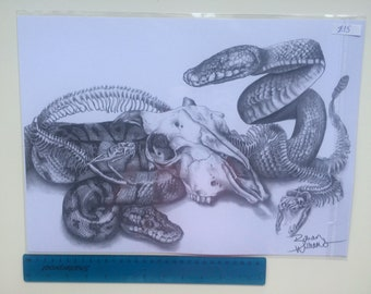 Snakes and Skull A3 Print/ Graphite Realism/ Scientific Illustration