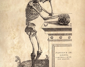 Anatomy Skeleton Print. Vintage Illustration Reproduction. Human Body. Bones. Andreas Vesalius Educational Biology Diagram Chart - CP111