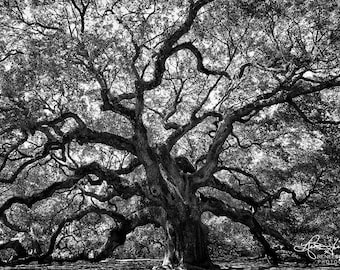 Angel Oak / Charleston / Oak Tree / Angel Oak Tree / Live Oak / Nature Photography / Black and White Art/ Charleston SC / Tree Art / Large