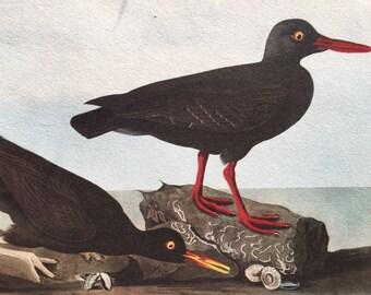 Vintage Bird Prints - Audubon Print - Vintage Bird Picture - Antique Bird Prints - Home decor art illustration - surf birds
