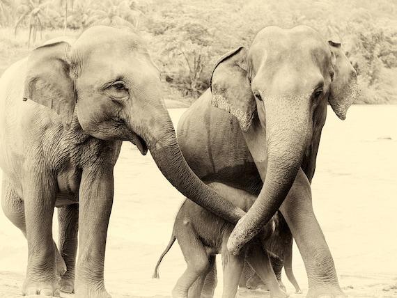 RIVER ELEPHANTS 3. Elephant Print, Sri Lanka, Giclee Print, Wildlife Photography, Limited Edition Print, Travel Photography