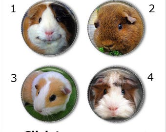 Guinea Pig magnets or pins - Choose your own set of 4! , Guinea pigs buttons, refrigerator magnets, fridge magnets, office magnets