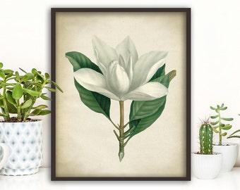White magnolia BOTANICAL print, flower art,magnolia poster, magnolia print, magnolia wall art, vintage Botanical illustration 8x 10
