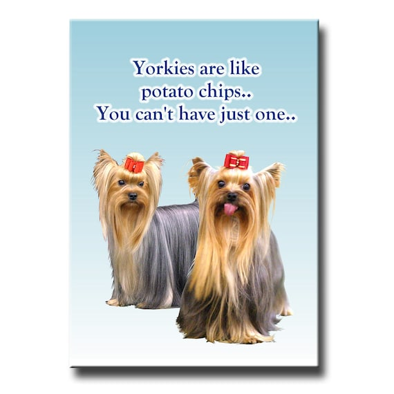 Yorkshire Terrier Can't Have Just One Fridge Magnet