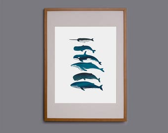 whales, whale print, wall art, picture of whales, whale species, whale illustration, whale screen print, marine art, whale drawing, giclee