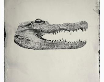Giclée Print: Gator Head