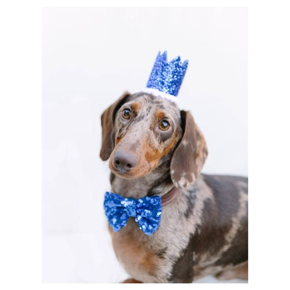 Dog Costume || Dog Birthday Hat + Bow Tie || Animal Party Hat || Cat Kitty Puppy Pig Birthday Crown Hat || Add Any Number