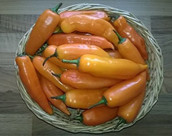 AJI Amarillo hot pepper v. Peru 10 seeds-Scharf-