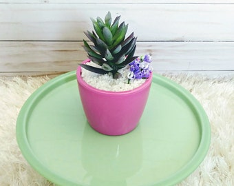Small Potted Faux Succulent