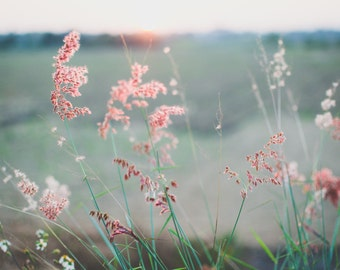 Field - Stems - Botanical - Botanical Photo - Pink and Green - Country Side - Digital Photo - Digital Download - Girls Room Decor