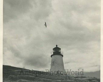 Lighthouse lonely seagull bird vintage art photo