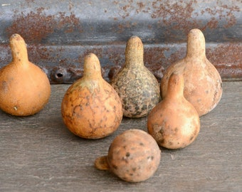Spinning Gourd Seeds, Dancing Gourds, Easy to Grow and Great for Gardening with Kids, Tennessee Spinning Gourd Seeds