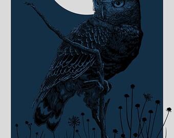Burrowing Owl | Midnight | 16x20 Screen Print