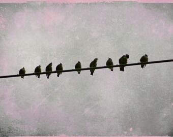 Birds on a Wire Photograph, Nursery art Print, Gray Pink Wall Print, Little Girls Room Print, Modern Birds on wire Art print 8x12 and up