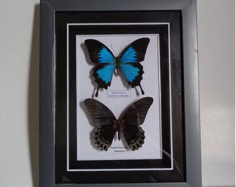 2 Real butterfy in acrylic frame for home decoration, gift..