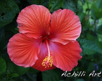Pink Flower- Elizabeth Park- Original Photograph