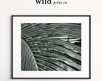 Palm Leaf Print, Green Palm Leaf Wall Art, Nature Photography Print, Tropical Home Decor, Plant Photo Print, Beach House Decor, Green Print