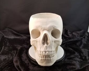 Realistic life size skull planter made from white concrete