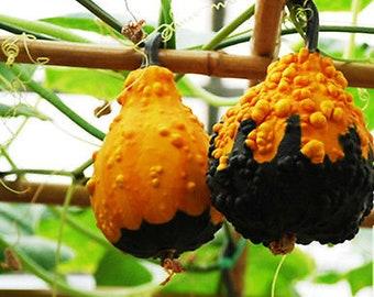10 Ornamental Bottle Gourd Seeds Lagenaria Siceraria Organic Vegetables TG1