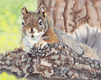 Pine Squirrel ~ Original Watercolor Fine Art Painting / Greeting card ~ by Heather Stinnett