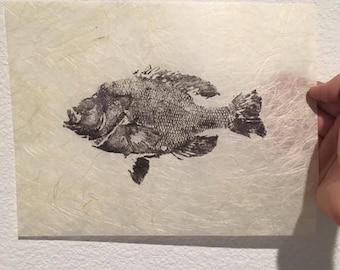 lake Hennessy California Bluegill Gyotaku Fish Print