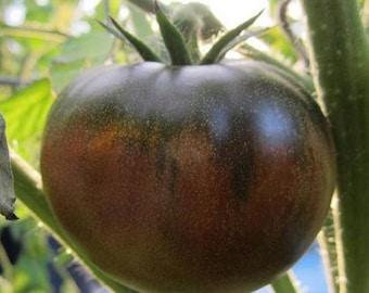 Chocolate Tomato OP, 10+ seeds
