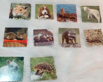Animal images for kids activity