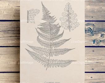 Botanical print, Vintage print, Fern Art, Instant download print, Botanical poster, Fern print, Botanical printable, PNG JPG