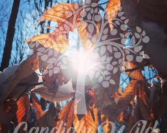 Sun Seeking Through The Leaves