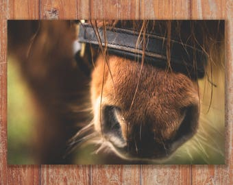 Horse Close-Up Canvas - Various Sizes of Wall Art available