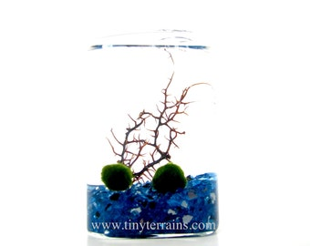 Mother's Day Gift Marimo Terrarium: Rectangular Glass Cube Moss Terrarium Kit, 23 Colors, Gift Wrap, Card, Fast Shipping, Personalized Gift