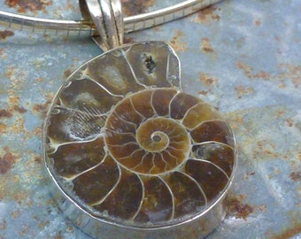 AMMONITE FOSSIL set in 925 sterling silver pendant.