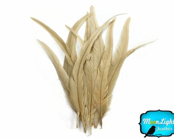 """15 Rooster Tail Feathers, 2 Inch Strip -  14-16"""" IVORY Bleach Long Coque Tails Feathers : 3746"""