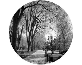 Penn State Picture - Elm Trees, Mall, Circle image on white background- 5x5 inch Black and White Photo, Timeless