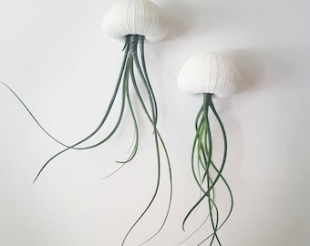 "Two ""Butzii"" Jellyfish Air Plants, Hanging Air Plants in Sea Urchin Shell"