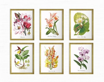 Botanical Print Set Magnolia Lilies Orchids Lady Slipper Water Lily Flower Print Home Decor Vintage Orchid Print Reproduction GR002