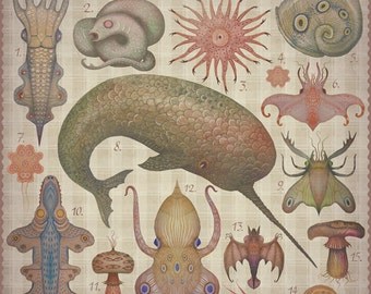 Marine Curiosities - 3 Art prints collection