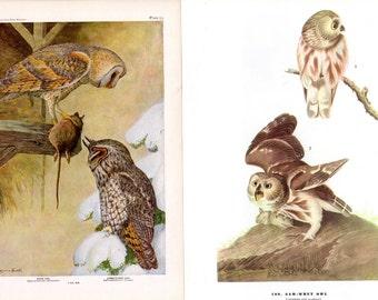 OWLS - Vintage Nature Art Book Prints Saw-Whet Owl Barn Owl Long-Eared Owl Book Plates