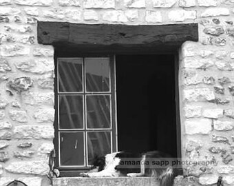 Giverny france dog in window black and white photo