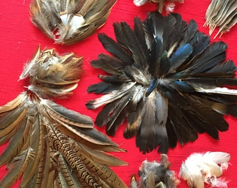 Over 100 Assorted Crow and other bird Feathers Ideal For Art and Craft Projects
