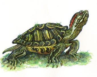 "Red-Eared Slider PRINT - 5x7"" turtle wall art illustration"