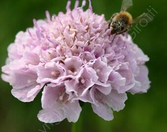Pincushion Nectar Photo Card Greeting